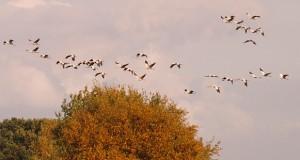 Vögel im Herbst