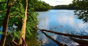 Spektakulärer Vogeltreff am Gülper See