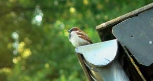 Vogelbeobachtung in der Stadt