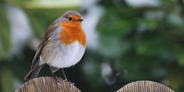 Gärten – Wohlfühloasen für Vögel
