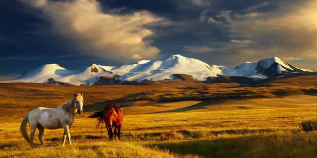 Auf Abenteuerreise in der Mongolei