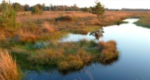 Vogelvielfalt im Naturschutzgebiet Rhäden