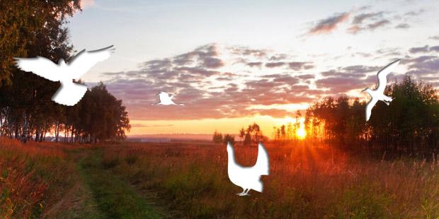 Vogelbestimmung leicht gemacht