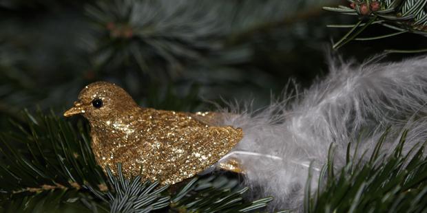 Weihnachtsgeschenke für Vogelfreunde