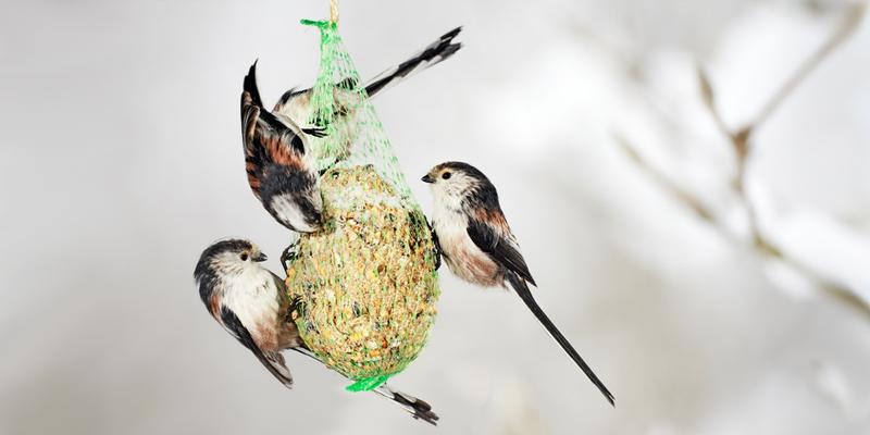 Vögel richtig füttern – Vogelbeobachtung im Garten