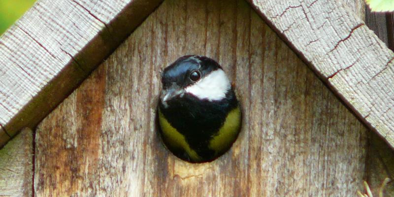 Nistkasten reinigen – Frühjahrsputz für Vogelbeobachter