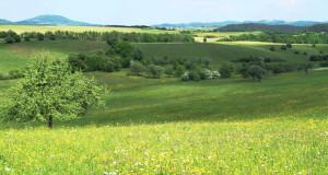 Seltene Vogelarten im Nationalpark Eifel