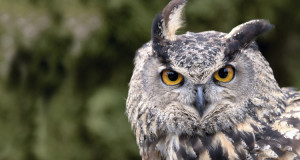 Eulen & Käuze – Jäger der Nacht