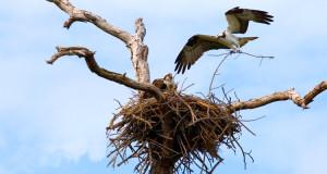 Vögel und ihre Nester