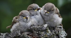 Jungvogel gefunden – was nun?