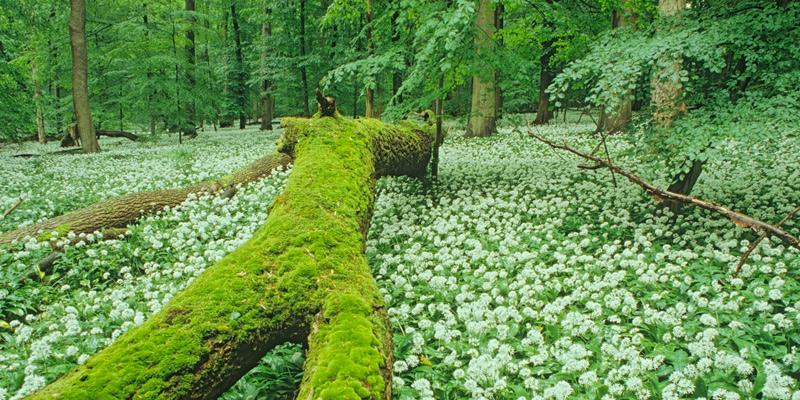 Nationalpark Hainich – den Buchenwald erleben
