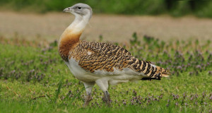 Naturfilm: Deutschlands wilde Vögel