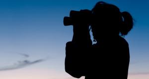 Ferngläser für die Vogelbeobachtung – Helligkeit & Farbtreue