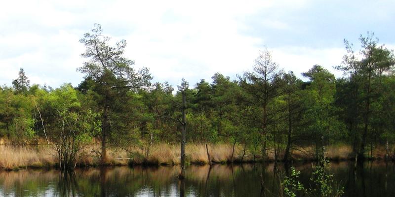Wasser & Wald im Biosphärenreservat Schorfheide-Chorin