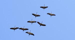 Die Zeit der Zugvögel