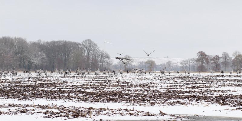 Das kalte Frühjahr und seine Folgen – Brutausfälle bei den Zugvögeln