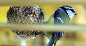 vogelbeobachtung vogel natur. Black Bedroom Furniture Sets. Home Design Ideas
