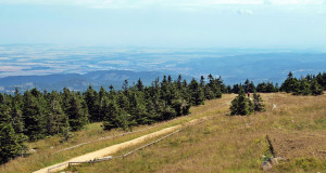 Nationalpark Harz – Rückzugsort für bedrohte Arten