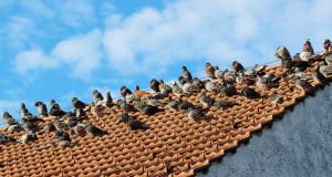 Stunde der Wintervögel 2014 – Eine NABU-Aktion