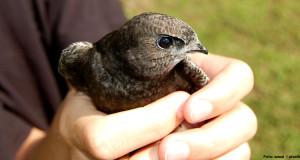 Ein tierischer Notfall – Erste Hilfe für verletzte Vögel