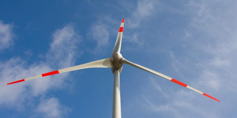 Bedrohen Windparks Vögel?