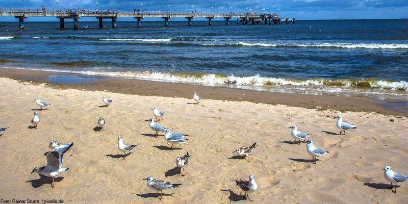 Lebensraum Ostsee – Versteck für Strandbrüter und Wasservögel
