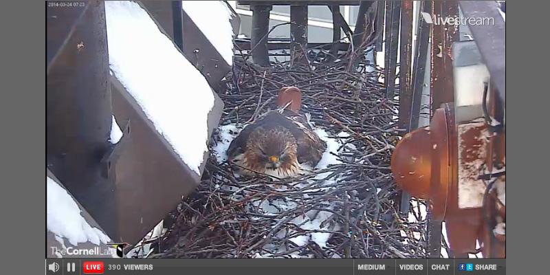 Storchencam & Co.: Vögel live beim Brüten beobachten