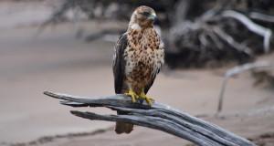 Kuriose Vogelwelt #1: Vögel vererben Parasiten