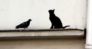 Kuriose Vogelwelt #2: Tauben als Kunstkenner