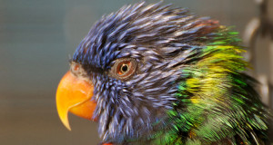 Kuriose Vogelwelt #3: Vögel sehen bunter