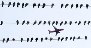 Flughafen München – Vogelschutz und Mensch im Konflikt