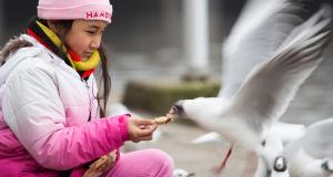 Vogelfütterung in der Stadt – Richtiges Füttern auf dem Balkon und am Wasser