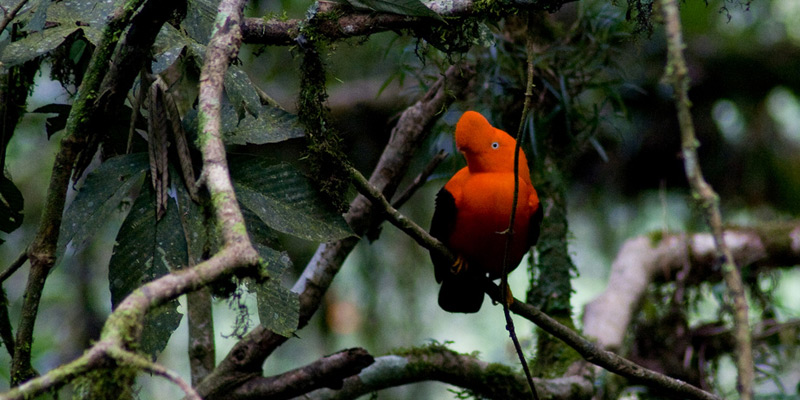 Vogelbeobachtung weltweit: Peru
