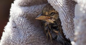 Verletzten Vogel gefunden? So findet ihr eine Vogel-Auffangstation