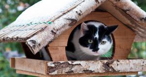 Bedrohen Katzen Vögel?: Wie schütze ich Vögel vor meiner Hauskatze?