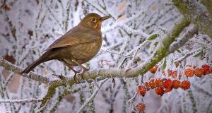 Nicht verpassen: Stunde der Wintervögel 2015 vom 9. bis 11. Januar