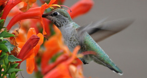 Kuriose Vogelwelt #6: Wie Vögel mit Bestäubung Blumen formen