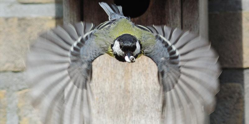 Kuriose Vogelwelt #7: Unterdrückte Vögel sind bessere Futterdiebe