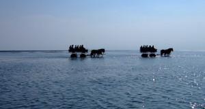 Neuwerk – Seeschwalben-Eiland vor Cuxhaven