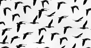 Weltzugvogeltag am 9. und 10. Mai 2015 – Energie vogelfreundlich gestalten