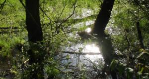 Die Donauauen zwischen Lechmündung und Ingolstadt – Ein Hoch auf das Hochwasser