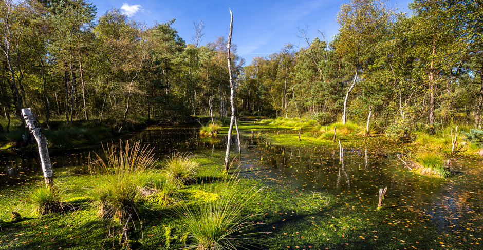 Torf und Federn – Vögel im Moor