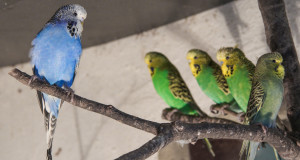 Kuriose Vogelwelt #11: Ich bin nicht müde, ich mag dich!