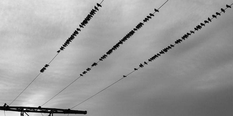Warum können Vögel auf Stromleitungen sitzen?