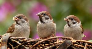 Wie wird mein Garten vogelfreundlich?
