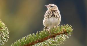 Gestatten, Vogel! – Vogelarten sicher bestimmen
