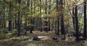 Der Hakel im Harz