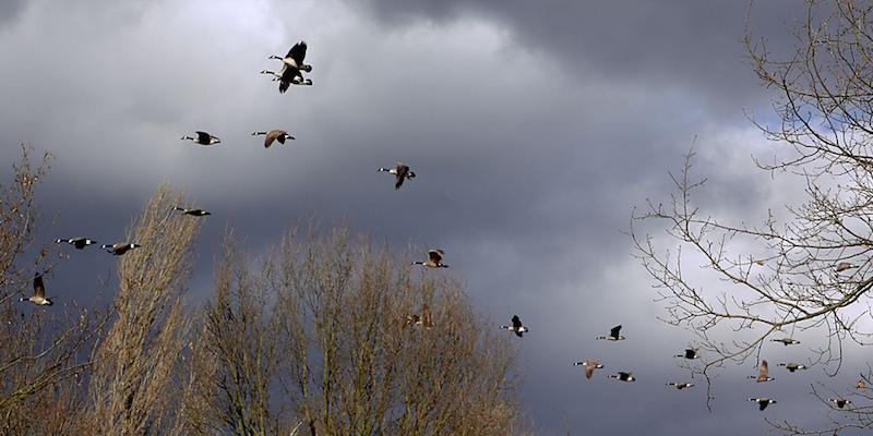 Deutsche Vogelschutzgebiete in Gefahr