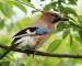 Der Wert unserer Vögel