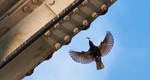Dein Haus ist mein Haus – Vogelschutz im Gebäudebau